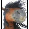 x-voltige-horse-x