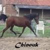 i-love-chinouk