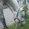 bye-poney