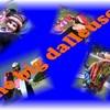 thebigdalleuses