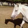 HorsesAndWe