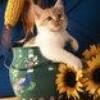 pretty-sunflower54