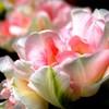 fleurs-plantes-du-monde