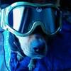 doguinette76