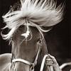 Zz-horses-zZ