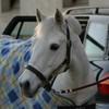 mesclic-mesflash-equus