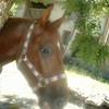 Horse-CavalOOOw