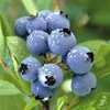blueberries35