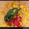 entomologie12