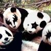panda3369