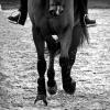 fana-d-chevaux