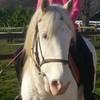 cheval-piiXx