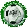 raja-club-athletic-casa