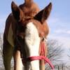 Lov-horse91