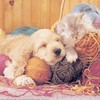 passion-crochet67