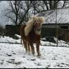 pix-de-horses