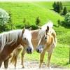 horselove12