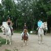 xx-just-horses-xx