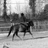 arts-of-horse