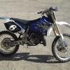 minipichon80