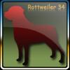 rottdog
