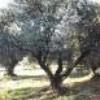 olive59400