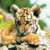 tigres39200