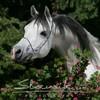 love-poney57