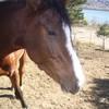 love-horses-lolo