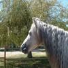 Horse31200