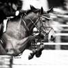 Horses-Storiie-Pix