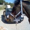 horse06140