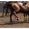horse-ball21