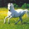 chevaux95400