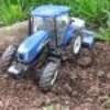 miniature81