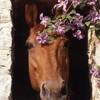 Sexy-horse2009