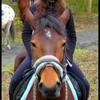 mavieleshorses