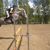 les-chevaux-et-moi62