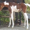 love-chevaux18