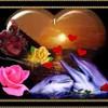 dophine59410