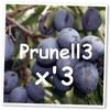 PRUNELL3