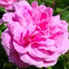 flowersin82