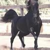 love-chevaux-x3