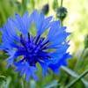 BlueTruth