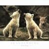 masterofwolfs