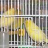 mes-oiseaux
