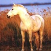 cheval-------love