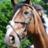 x-serie-horse-x