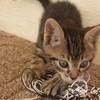 Mon-cat
