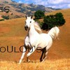 loulous-cheval